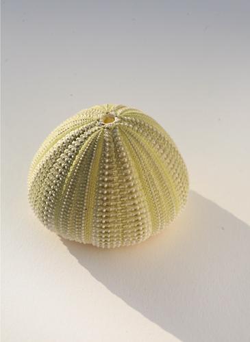 shellgreen